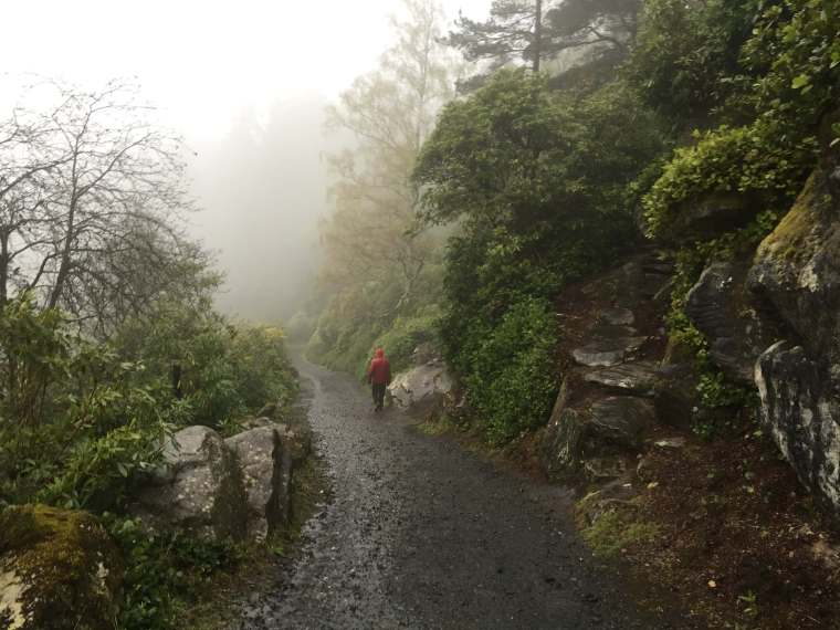 Cragside-Walks-Mist