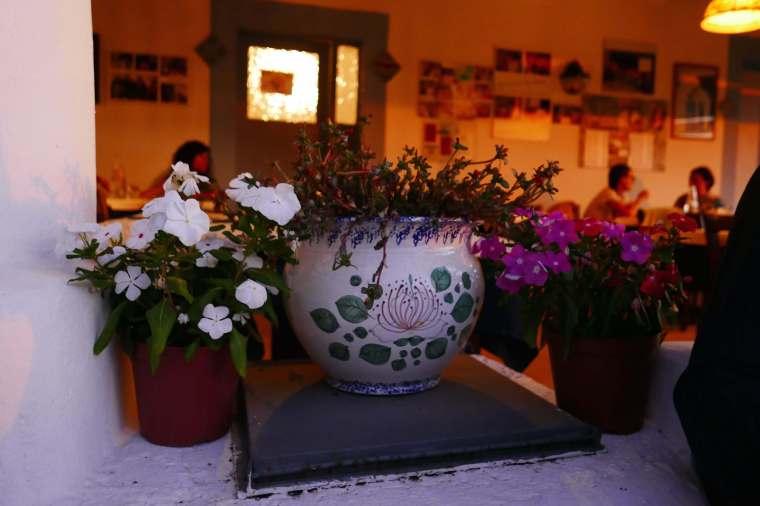 plants-pollara-restaurant